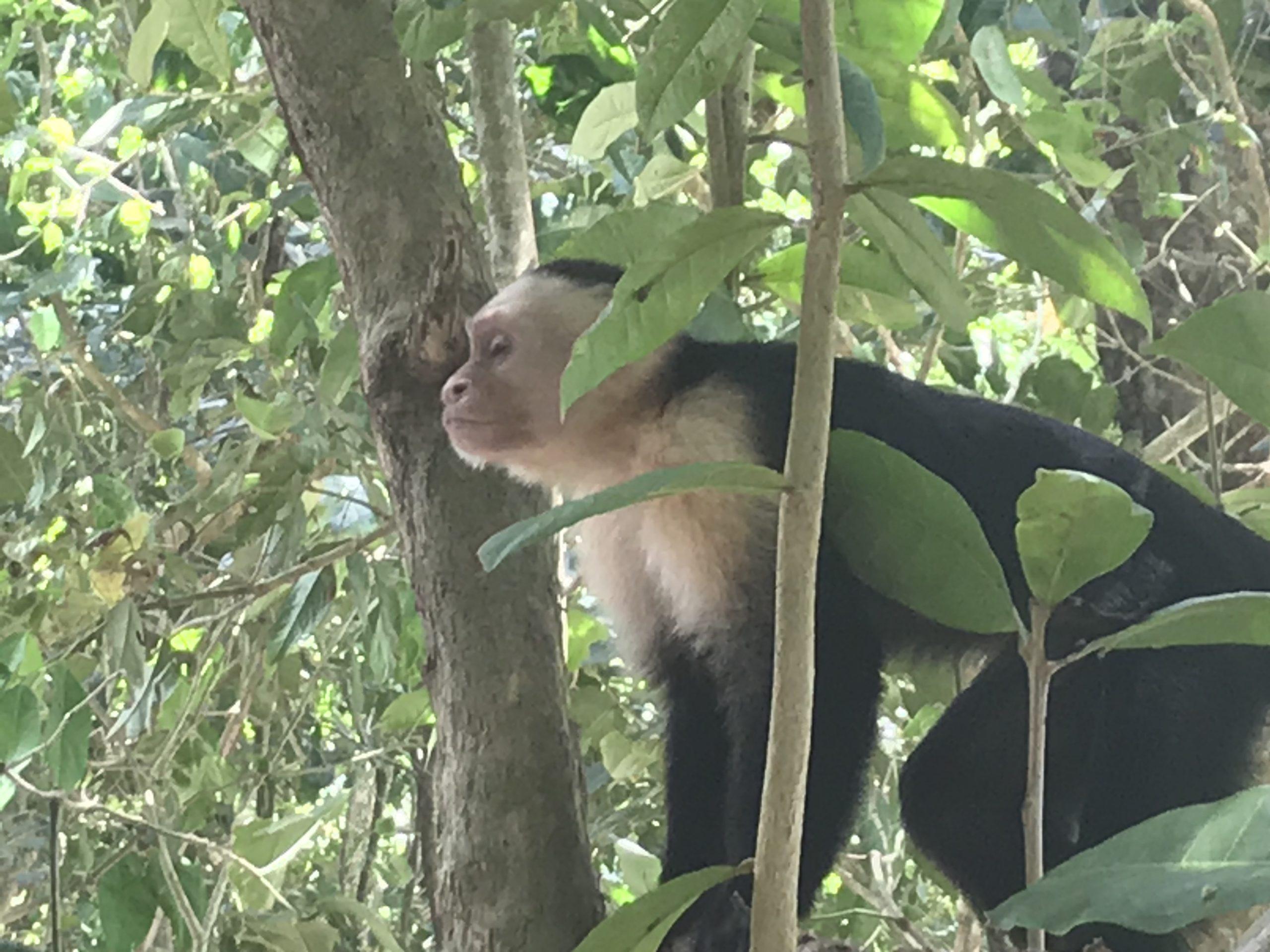 Costa Rica: Manuel-Antonio-National-Park and Quepos