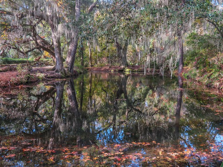trees reflecting in perfectly still water with orange leaves floating in foreground Magnolia Gardens Charleston