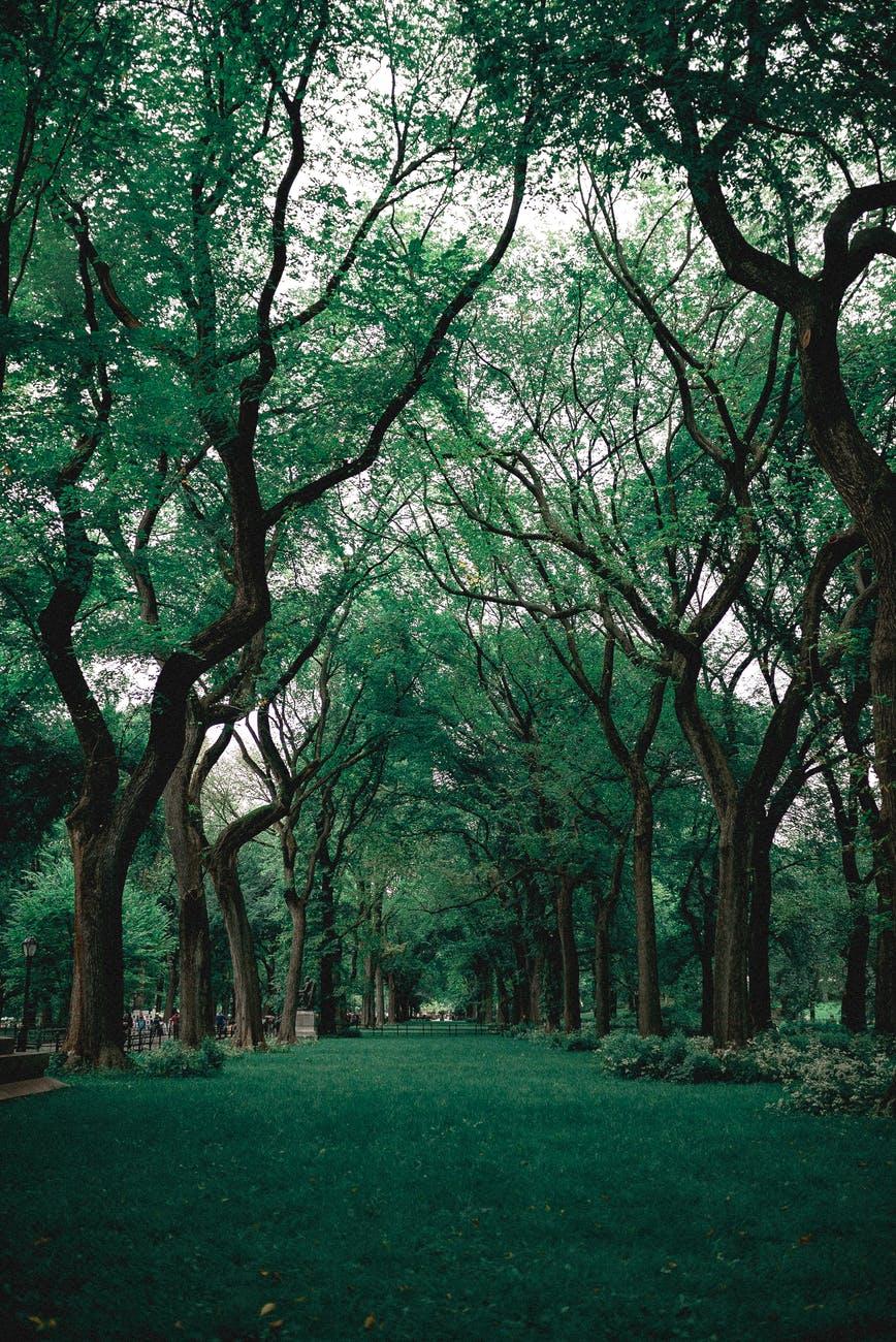 green grass near trees