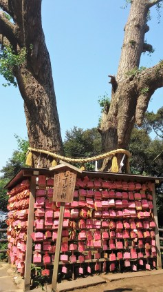 Lovers' twin trees. The ema tablets are inscribed mostly with prayers for luck in love.