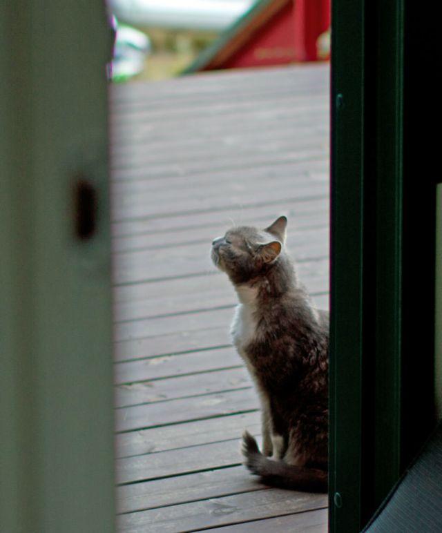 Pus vil inn