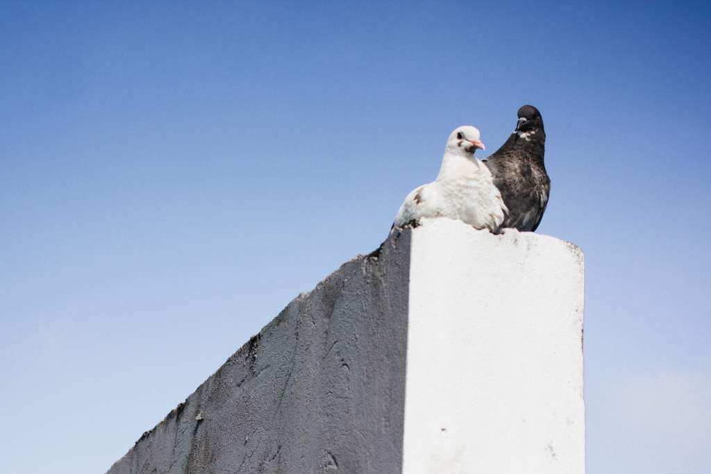 Two birds on a white wall.