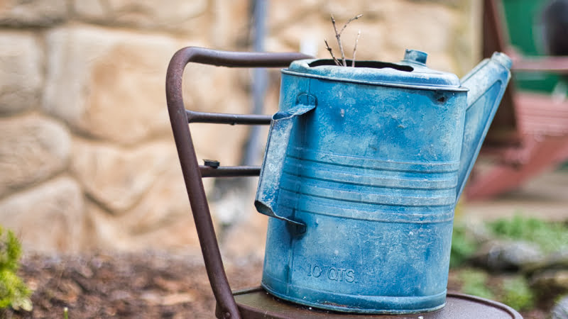 Blue Watering Can and Cows