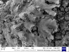 oregan maple lichen004 lo res