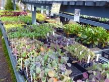 Cool-season veggies: broccoli, cabbage, lettuce and more