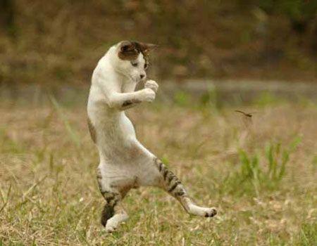 Большая подборка смешных котов (95 фото)