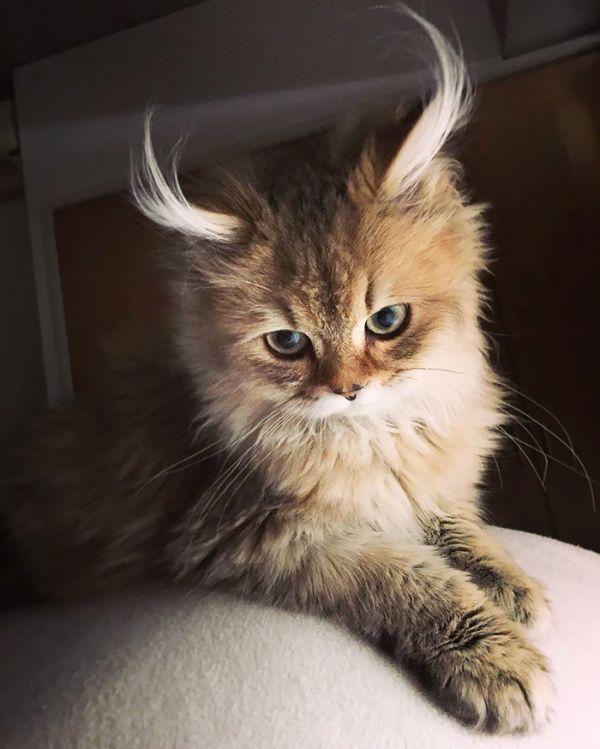 En Güzel Kedi'yi Seçmeye Hazırmısınız? (29 Fotograf)