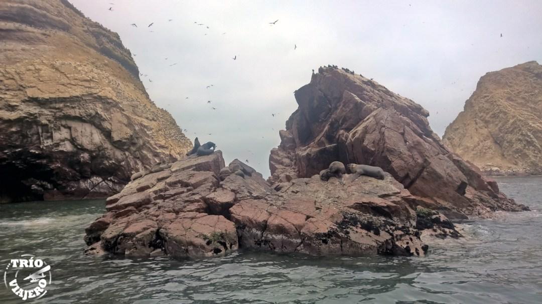 Islas Ballestas - Paracas - Perú - América (Trío Viajero)