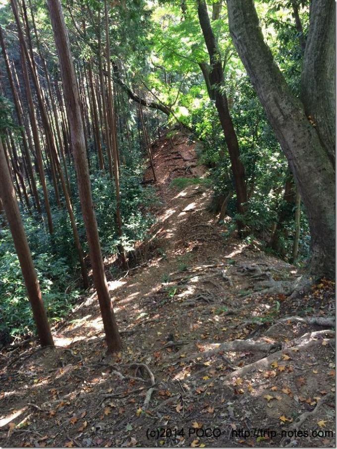 天覚山山道
