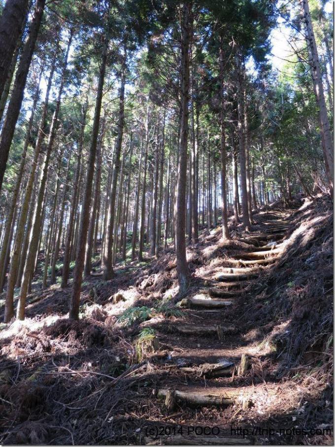 シダンゴ山山道