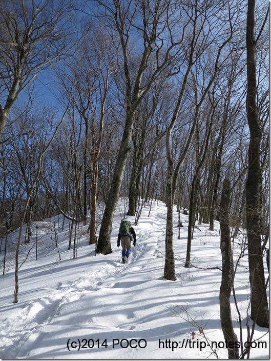 ブナと雪道と青空
