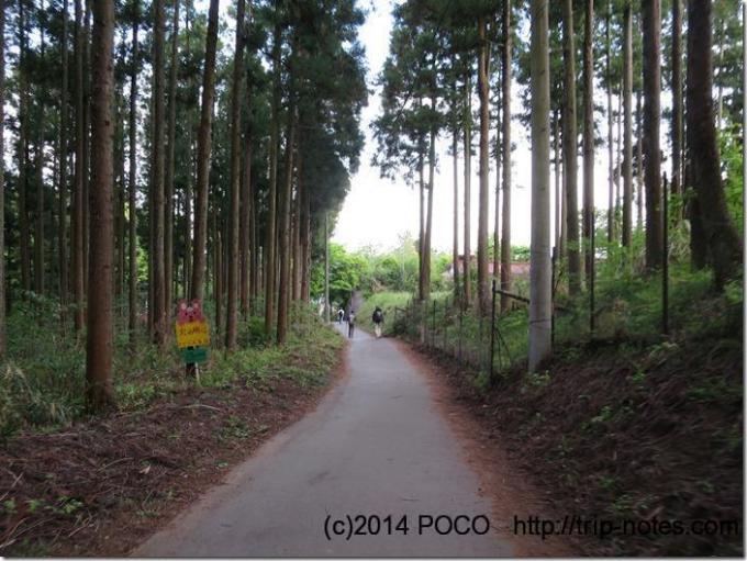 大倉近くの林道