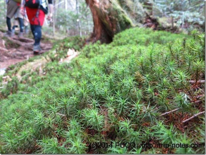 編笠山の苔