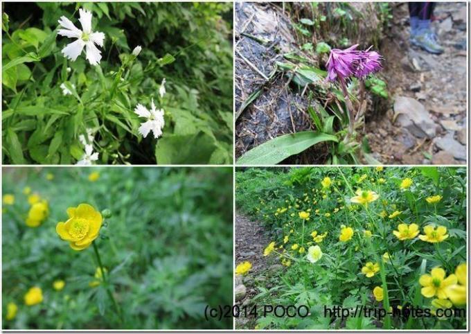 白山のお花