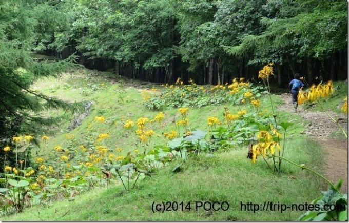 稜線のお花畑