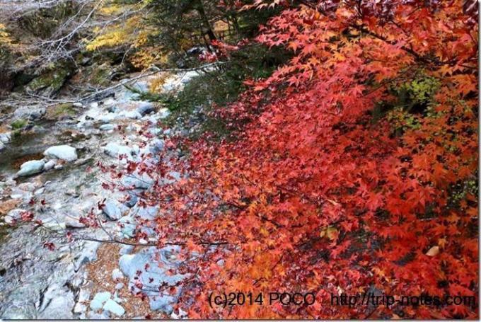 奥祖谷二重かずら橋の紅葉