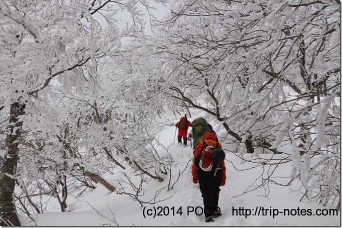 大山夏山登山道の樹氷