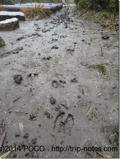 屋久島登山道鹿の足跡