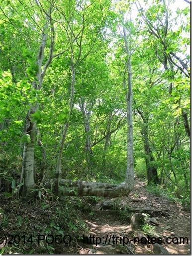 西黒尾根L字の木