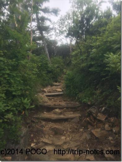 冷池山荘とテン場の間の登山道