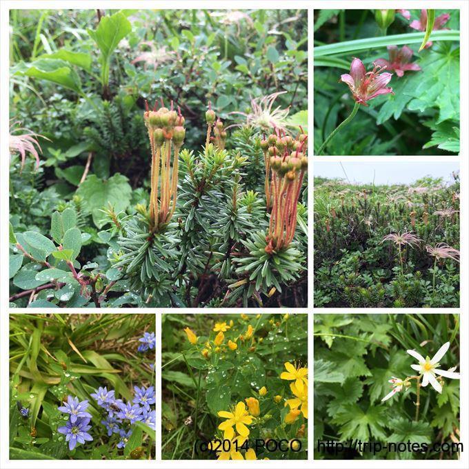 南竜山荘周辺の花
