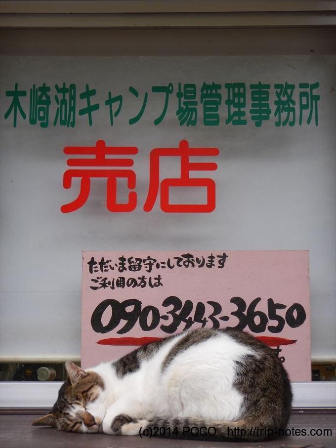 木崎湖キャンプ場の留守番猫