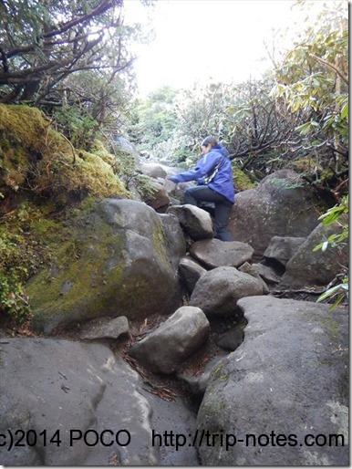 青年小屋から編笠山の間の登山道