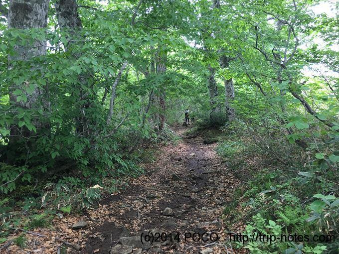 西黒尾根樹林帯