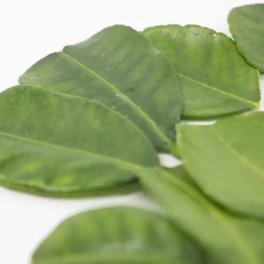 コブミカンの葉のイメージ画像