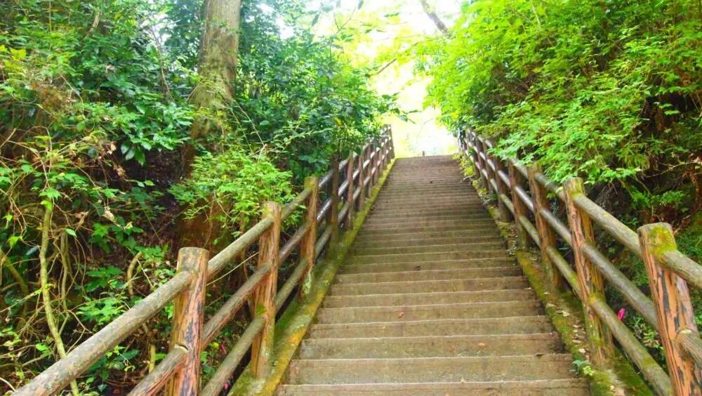 千葉県養老渓谷の森林浴を楽しめるハイキングコース