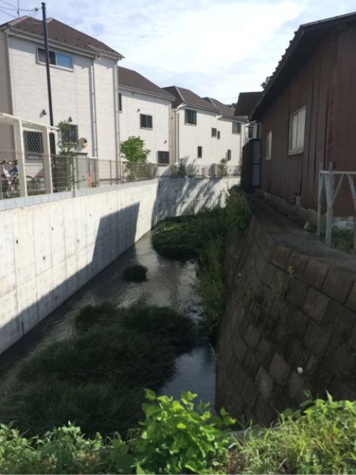 湧水群からの流れ