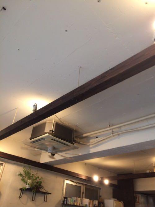 リトルスターレストランの天井