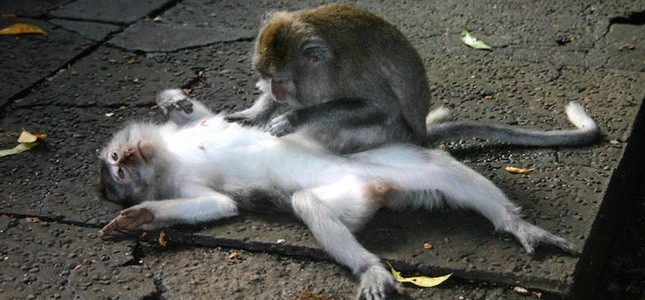 Все о тайском массаже