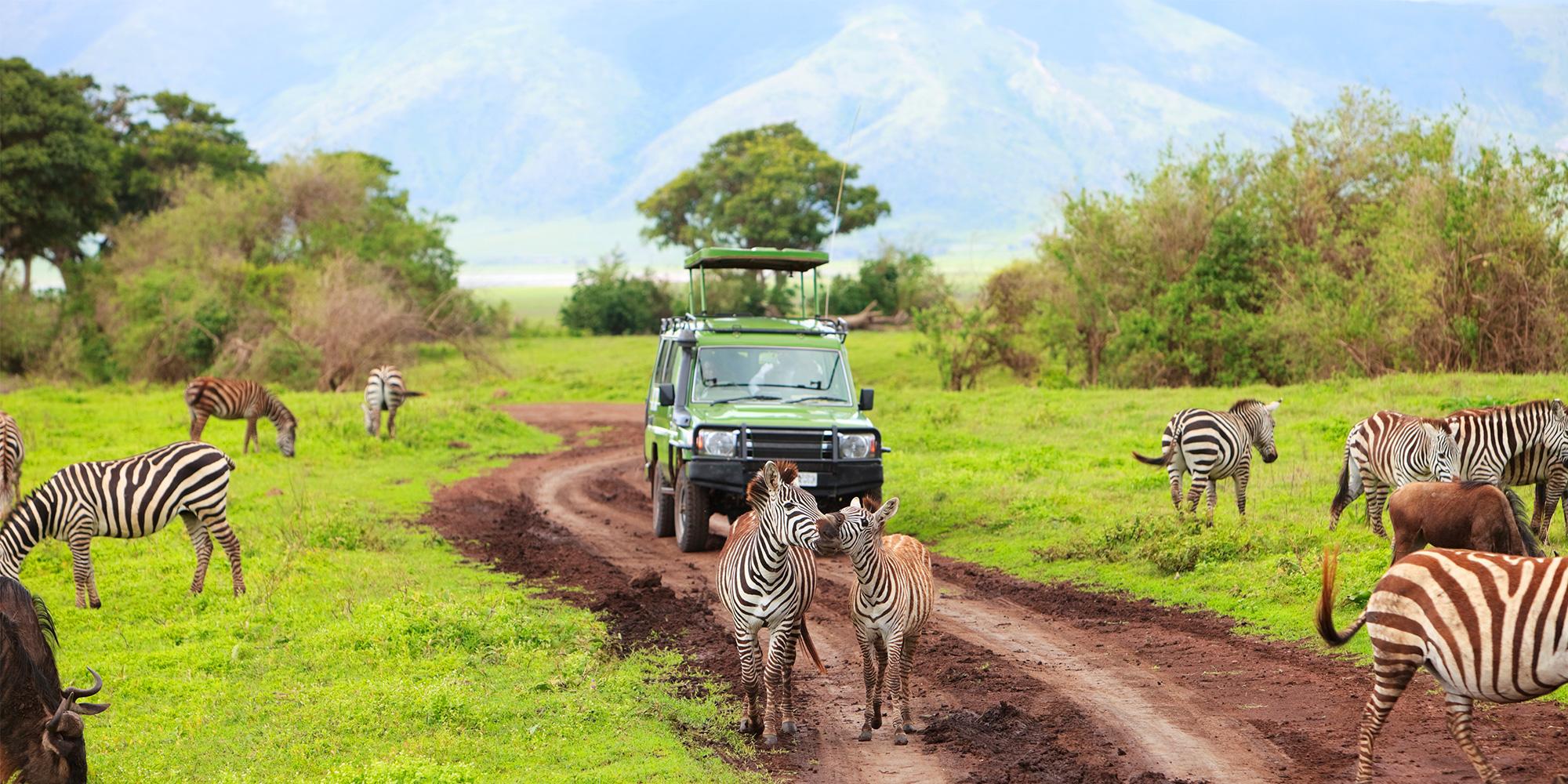 How to be a Good Tourist on Safari