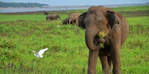 Elephant Nutrition and Diet