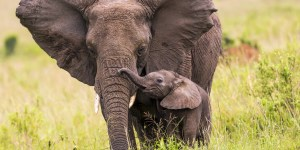 Tethering: Integral to Elephant Care