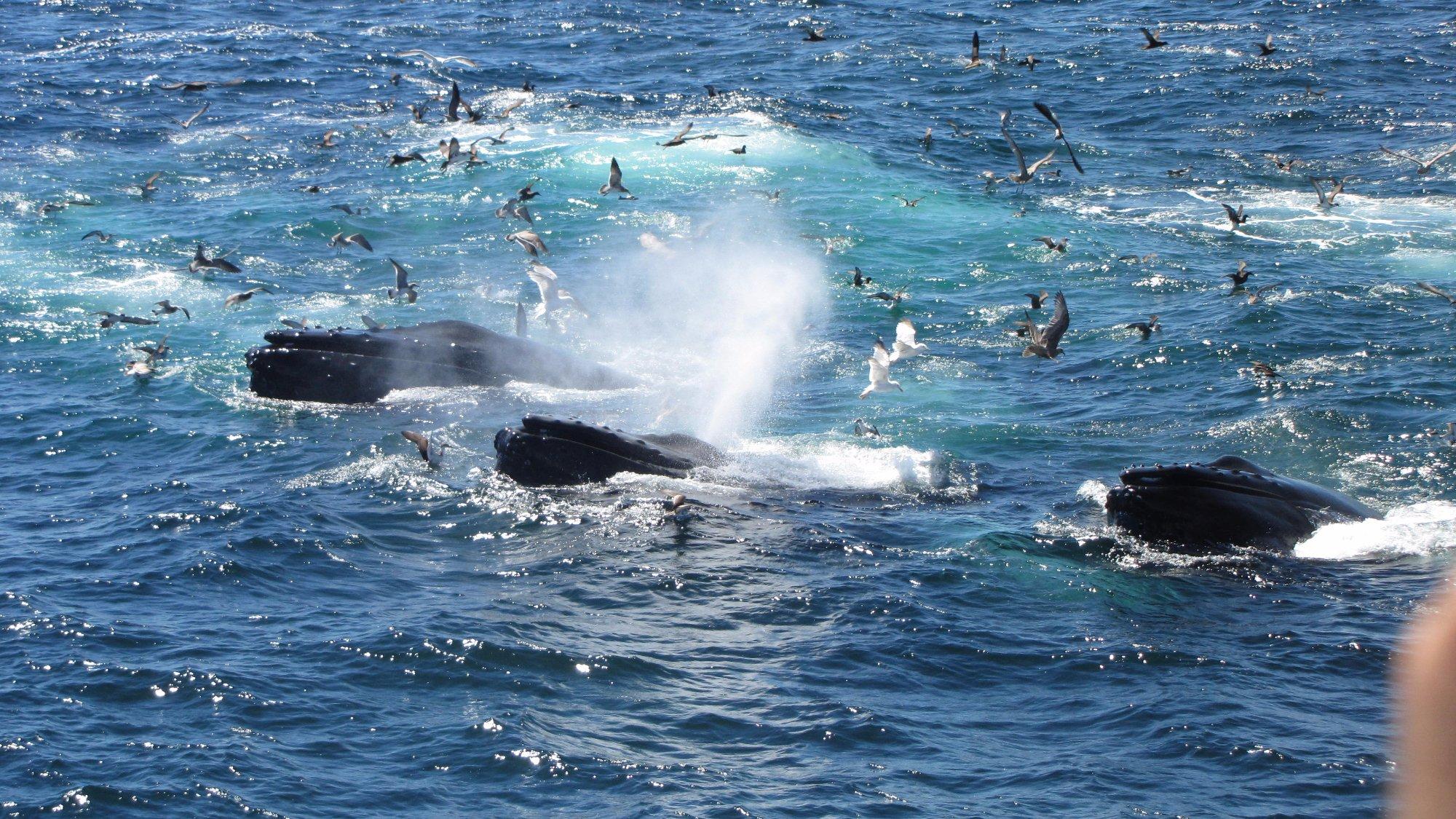 Hyannis Whale Watcher Cruises