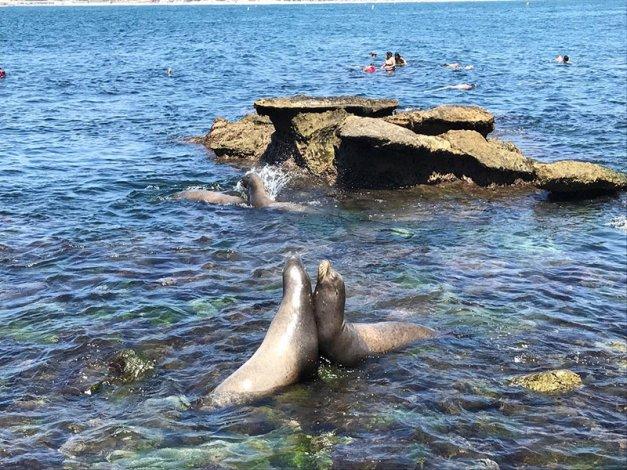 Guía de buceo de San Diego
