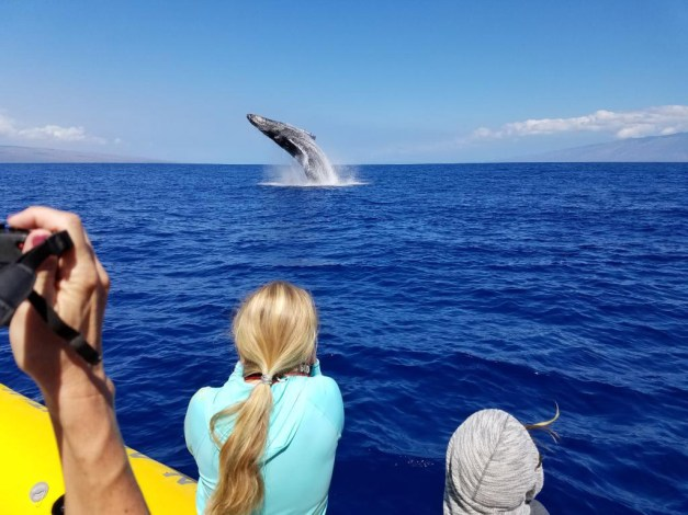 PacWhale Eco-Adventures