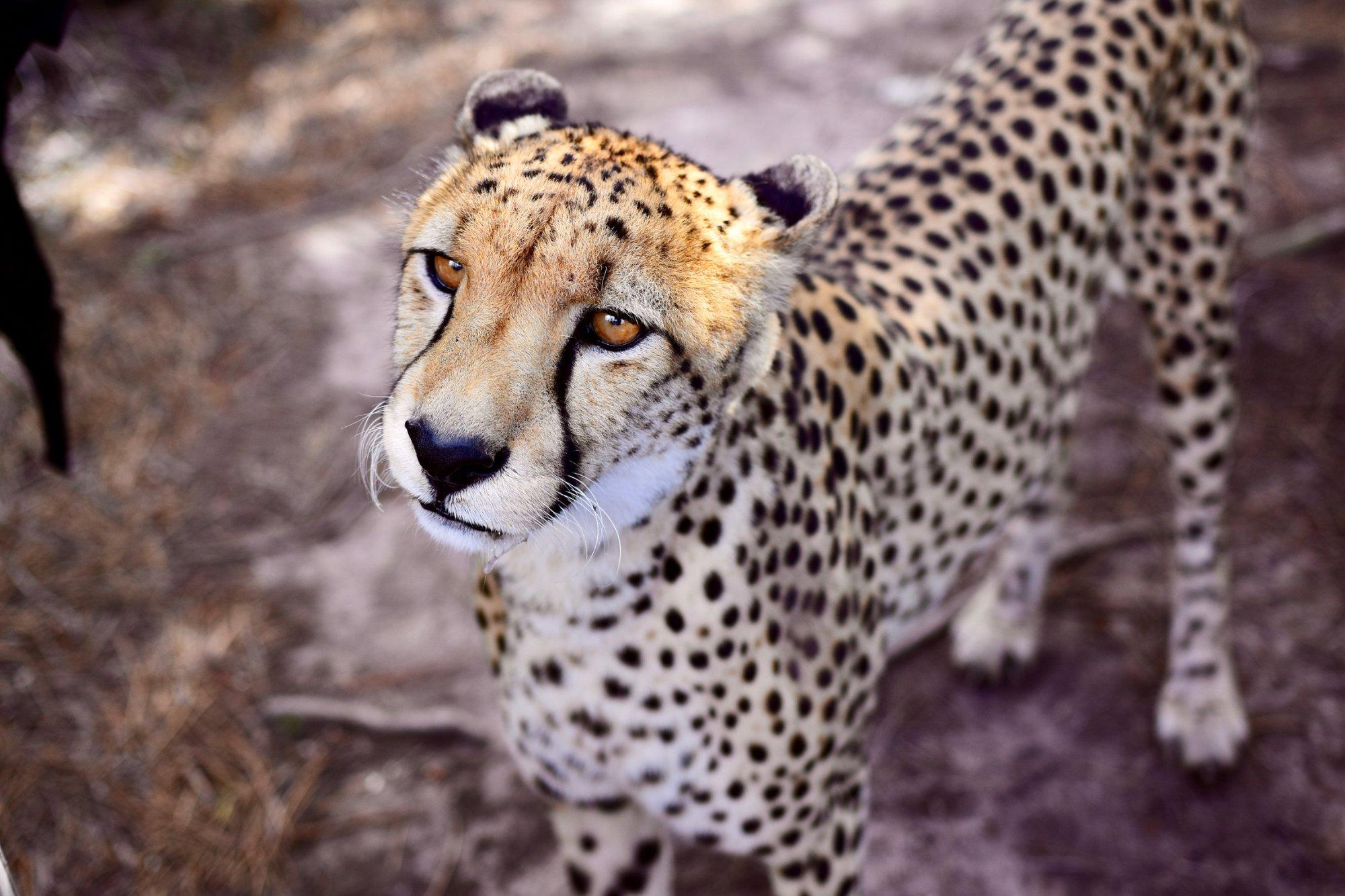 incontri per gli amanti della fauna selvatica