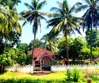 Most Goan houses are typically surrounded by greenery