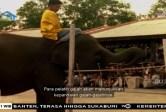 Bagaimana caranya agar Irwan bisa menjadi pelatih gajah?