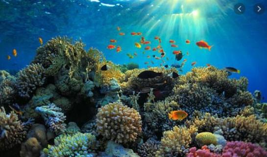 Apa saja yang dapat kita lakukan untuk menjaga terumbu karang?