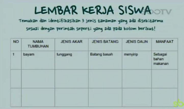 Soal dan Jawaban SBO TV 25 Agustus SD Kelas 4
