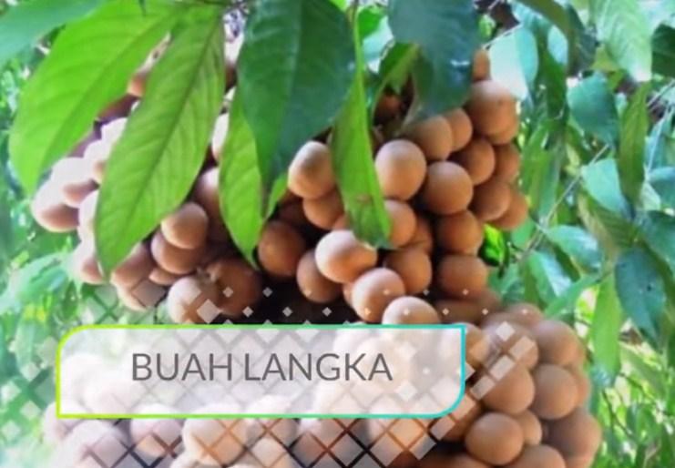 Apa saja manfaat keragaman buah langka khas Indonesia bagi kesejahteraan masyarakat?