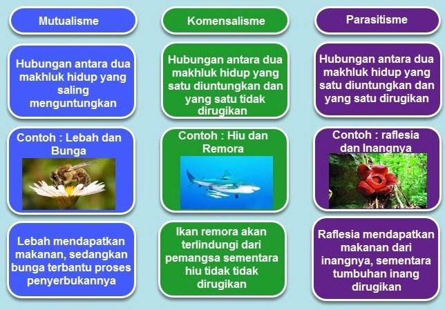 Contoh pamflet tentang simbiosis