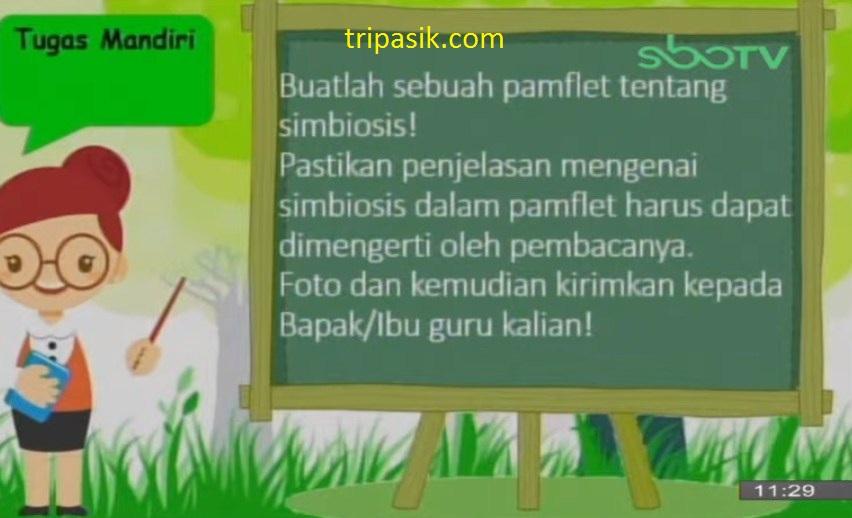 Soal dan Jawaban SBO TV 25 November SD Kelas 5
