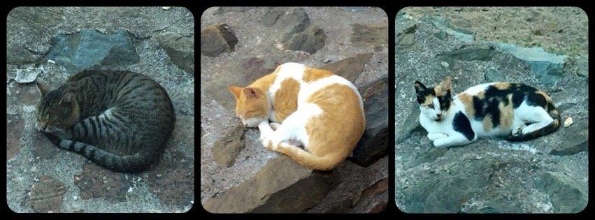 cats of Thessaloniki