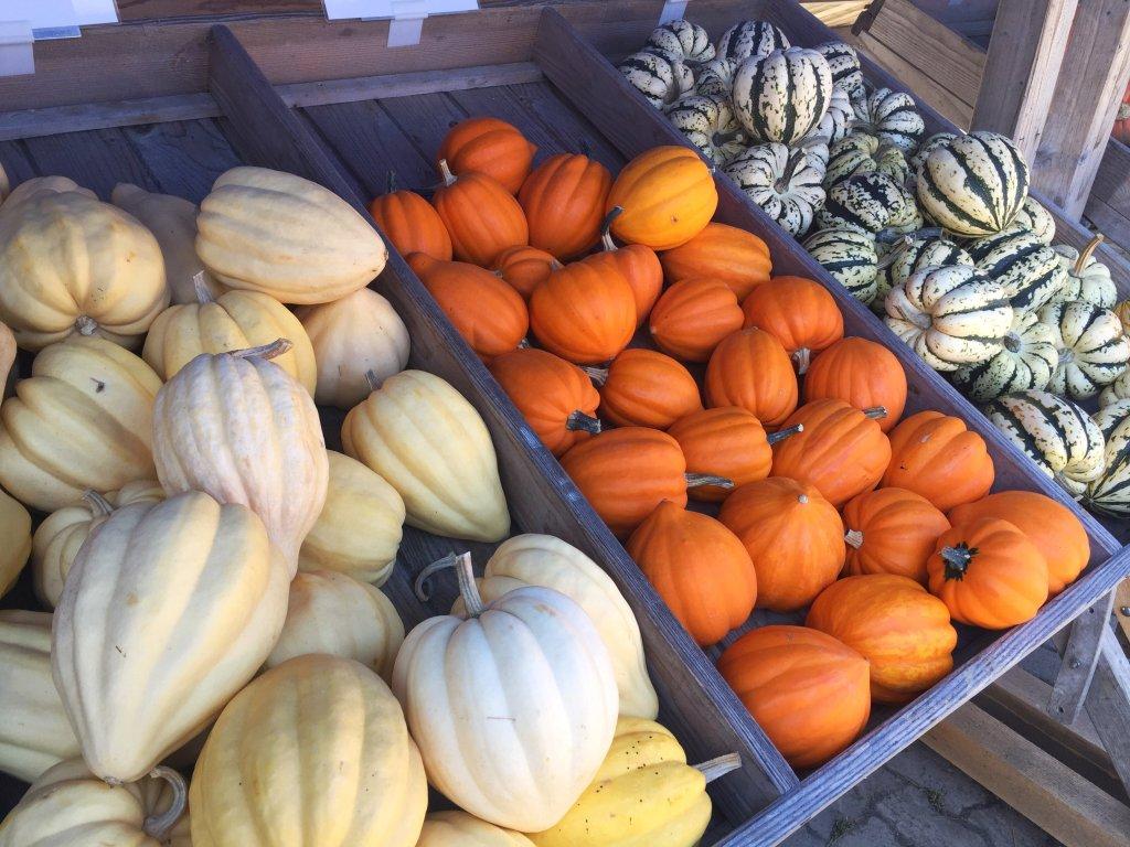 Pumpkin Festival Baselland three varieties of pumpkins