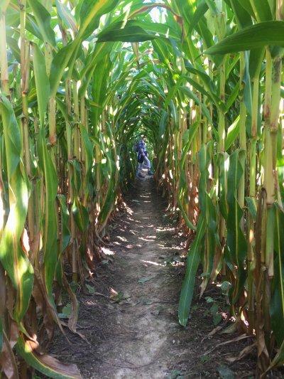 Pumpkin Festival Baselland corn rows